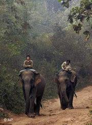 Elephanten in Laos; Foto: AP
