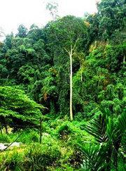 Regenwald in Indonesien Foto: DW/Golte-Schröder