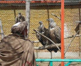 Tête-à-tête mit den Geiern: ein paschtunischer Zoobesucher; Foto: Marian Brehmer
