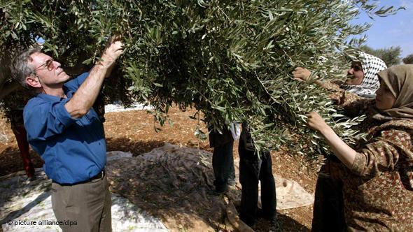 Der israelische Autor Amos Oz (l) pflückt am 30.10.2002 im Dorf Akrabe (Westjordanland) gemeinsam mit palästinensischen Frauen Oliven; Foto: picture-alliance/dpa