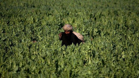 Arbeiter auf einem Mohnfeld Marjah, Afghanistan, Foto: AP