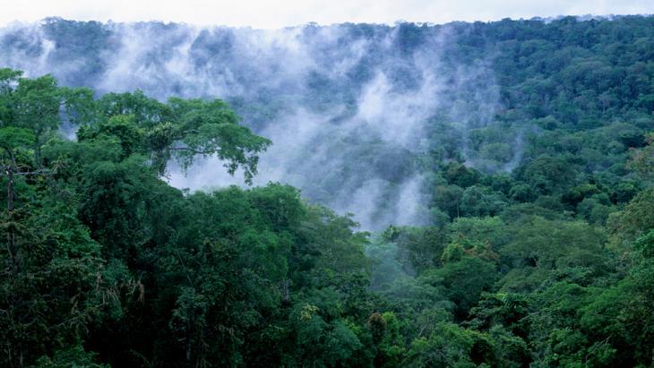 Regenwald im westlichen Kongobecken; Foto: picture alliance/ WILDLIFE