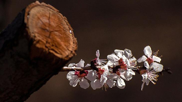 Blume sprießt aus einem Baumstamm; Foto: FARS