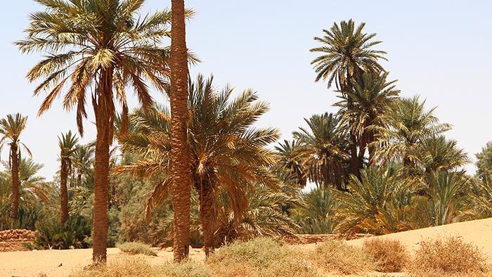 Eine Oase in einer Wüste am Persischen Golf; Foto: DW