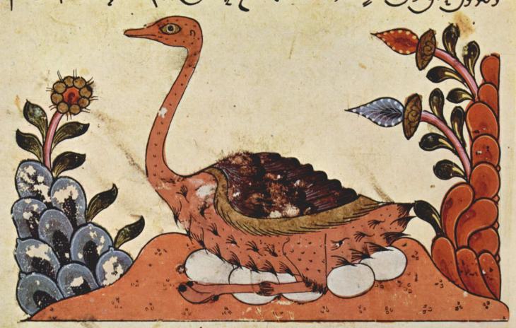 Darstellung eines Straußes; syrische Buchmalerei um 1335 aus dem Buch der Tiere des al-Dschahiz; Quelle: Wikipedia