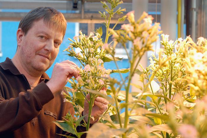 Prof. Dr. Jörg Kudla, Leiter des trinationalen Pflanzenforschungsprojekts; Foto: WWU/Peter Grewer
