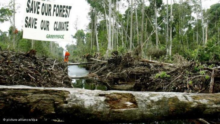 Greenpeace-Protest gegen die Abholzung des Regenwaldes auf Sumatra, Indonesien; Foto: picture-alliance/dpa