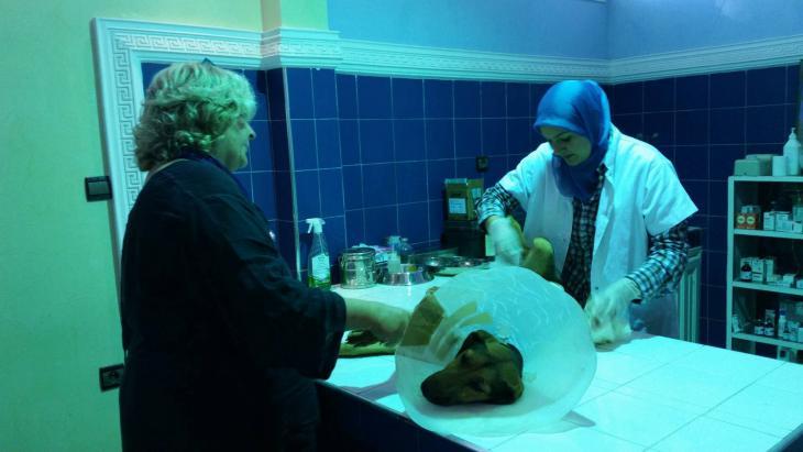 Tierärztin Dr. Amina Bouchfenj untersucht die sterilisierte Hündin Inka, bei der es medizinische Komplikationen gab; Foto: Regina Keil-Sagawe