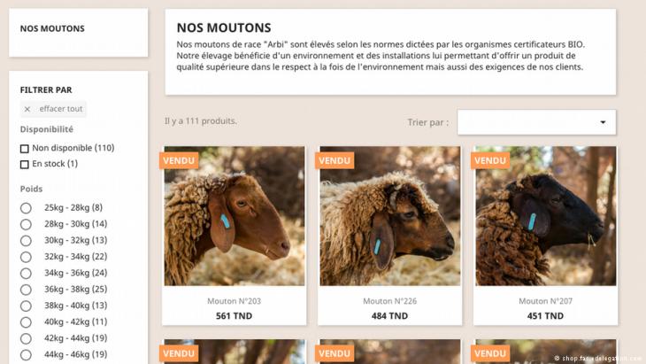 "Screenshot Webseite ""Sfar-Bauernhof"""
