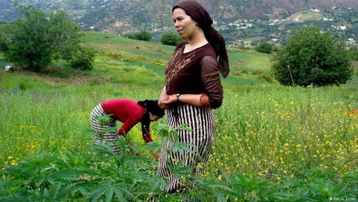 Hanfernte im nordmarokkanischen Rifgebirge; Foto: DW