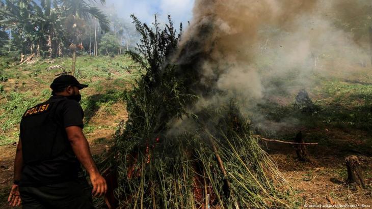 Polizeirazzia: Verbrennung von Marihuana-Pflanzen in Nord-Aceh; Foto: picture-alliance