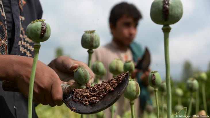 Opiumernte in der Nangarhar-Provinz, Afghanistan; Foto: Getty Images/AFP/N. Shirzada