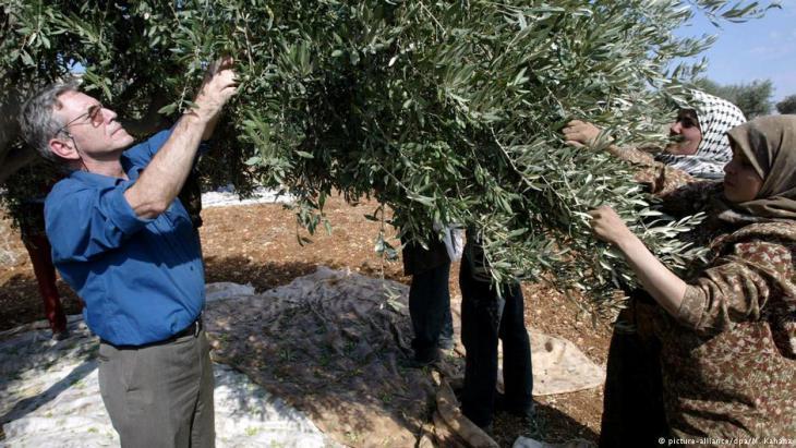 Amos Oz  bei der Olivenernte mit palästinensischen Bauern im Jahr  2002 als Zeichen der Solidarität gegen den fortschreitenden Siedlungsbau im Westjordanland; Foto: picture-alliance/dpa/M. Kahana