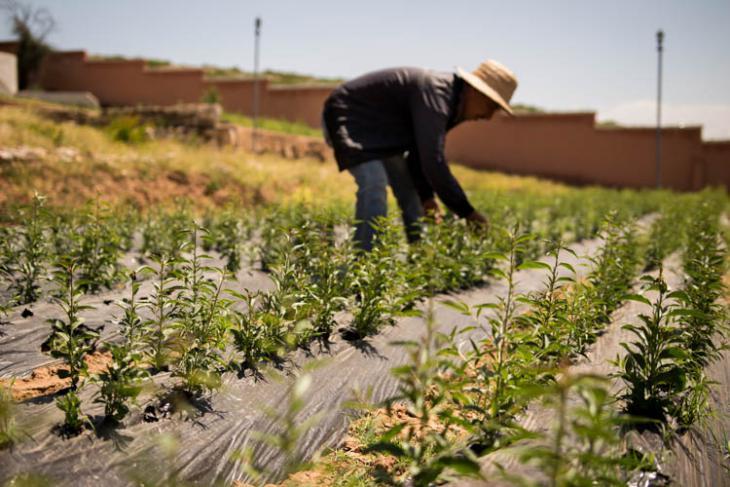 In den vergangenen drei Jahren wurden in Akrich 150.000 Samen von Mandel-, Feigen-, Zitronen und Johannisbrotbäumen gepflanzt; Foto: High Atlas Foundation