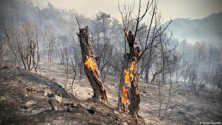 Brennende Olivenbäume in der Türkei; Foto: Serkan Ocal/DW