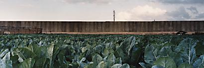 02 Cabbage Field & Wall