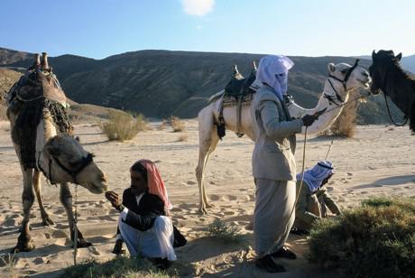Vorbereitung für traditionelles Kamelrennen