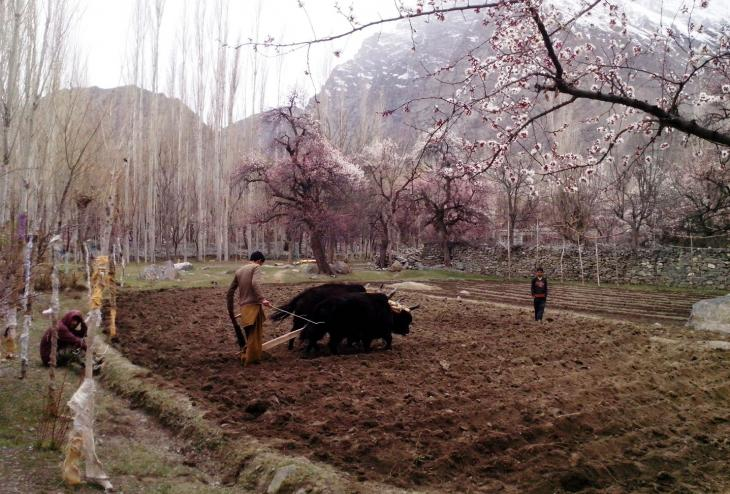 Den Boden bestellen, Skardu, Gilgit-Baltistan, Pakistan. Foto: Usman Mahar