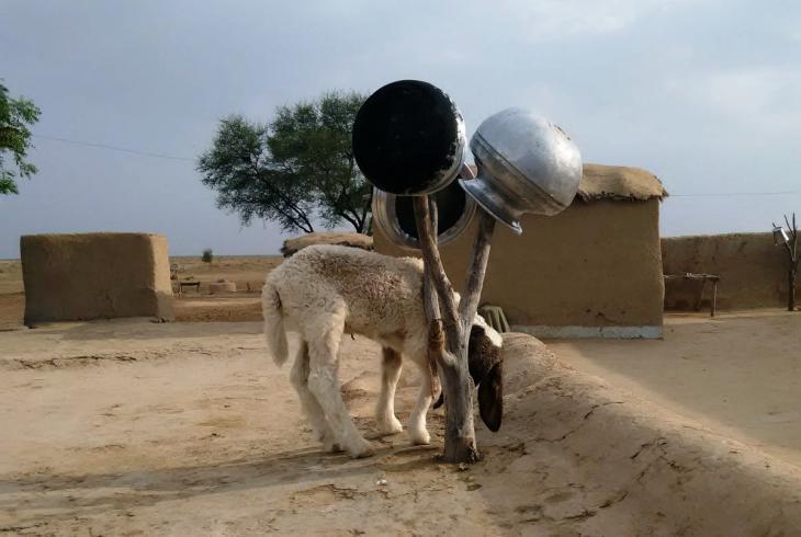 Wasserbehälter zum Trocknen am Baumstumpf aufgehängt. Foto: Usman Mahar