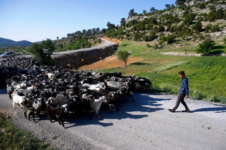 Savas Gobut mit einer Ziegenherde bei Mersin; Foto: Reuters/Osman Orsal
