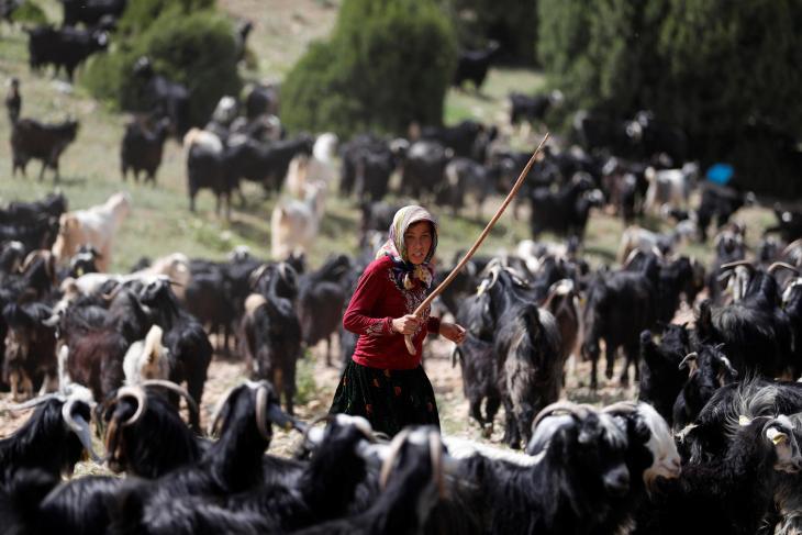 Ein Familienmitglied vom Stamm der Yoruk treibt die Ziegen an; Foto: Reuters/Osman Orsal
