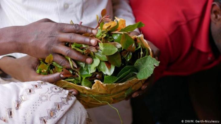 Khat-Blätter in Harar, Äthiopien (DW/M. Gerth-Niculescu)