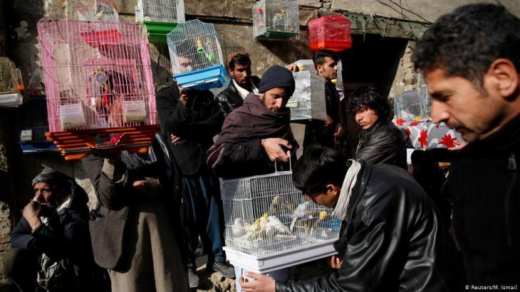 Vogelverkäufer und ihre Kunden suchen auf dem Vogelmarkt Ka Faroshi in Kabul, Afghanistan, Kanarienvögel aus. Foto: REUTERS/Mohammad Ismail