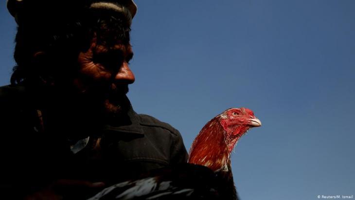 Sayed Mohammad Ali hält seinen Hahn auf dem Vogelmarkt Ka Faroshi in Kabul, Afghanistan. Foto: REUTERS/Mohammad Ismail