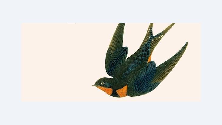 Ausschnitt des Buchcovers 'Kellervogel' von Fariba Vafi, © Rotbuch Verlag