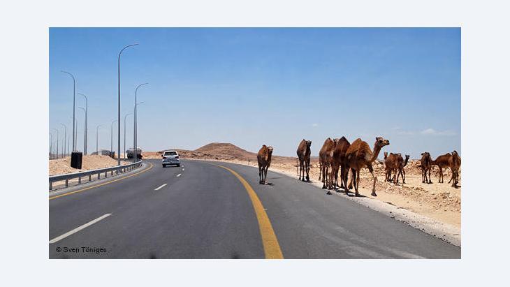 Kamele an einer Autobahn im Sultanat Oman; Foto: DW