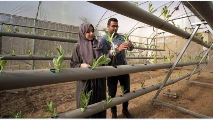 Das Leben im Schatten der Gaza-Blockade erfordert häufig Kreativität und Innovation. Agraringenieur Azem Abu Daqqa und Pharmazeut Fidaa Abu Alyan sind zwei von tausenden Universitätsabsolvent*innen, die den Herausforderungen und mangelnden Jobchancen im Gazastreifen mit eigenen technologischen Initiativen entgegentreten: hydroponischem Anbau und Pflanzenextraktion.
