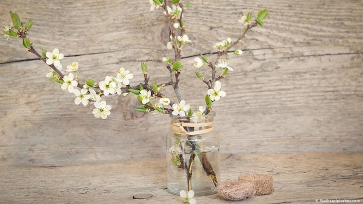 Wer am 4. Dezember Zweige von einem Obstbaum schneidet und sie bei sich im Haus in eine Vase stellt, der darf damit rechnen, dass die Obstzweige an Weihnachten erblühen.