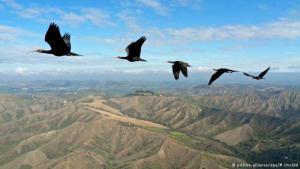 Fliegende Ibisse; Foto: picture-alliance/dpa/M. Unsold