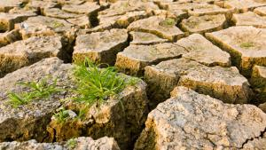 Symbolbild Klimawandel - Dürre trockene Erde Gras; Quelle: Colourbox