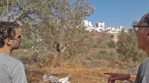 Zwei freiwillige Helfer bei der Olivenernte schauen in Richtung Modeiin Ilit, eine jüdisch-orthodoxe Siedlung, die auf palästinensischem Gebiet gebaut worden ist; Foto: DW/U.Schleicher
