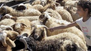 Markt mit Schafen für das Opferfest; Foto: Getty Images/AFP