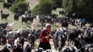 Wenn im Süden der Türkei der Sommer kommt, werden die Ziegen allmählich unruhig und die Familie Gobut weiß, dass es an der Zeit ist, die Zelte zu packen und mit ihrer Herde von etwa eintausend Tieren auf die lange Reise nach Norden zu ziehen.