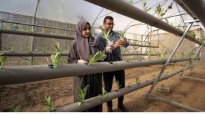 Die beiden Agraringenieure von Abu Daqqa inspizieren Sämlinge, die mit Hydrokultur gepflanzt wurden; Foto: Afaq