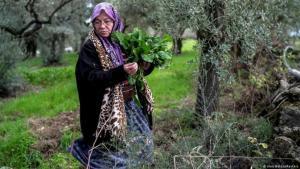 Türkische Bäuerin Tayyibe Demirel. Foto: Umit Bektas/Reuters