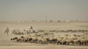 Schäfer bei ehemaliger IS-Hochburg Al-Rakka (2017): Verarmte Bauern als leichte Ziel für Terroristen. Foto: Chris Huby/Le Pictorium/imago images