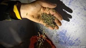 Hoffnung auf legalen Gewinn: Ein marokkanischer Farmer verpackt Cannabis-Samen; (Foto: Fadel Senna/Getty Images/AFP.)