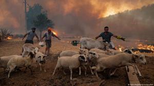 Bauern treiben ihre Tiere in Sicherheit vor einem Waldbrand in der Türkei; Foto: Yasin Akgul/Getty Images/AFP