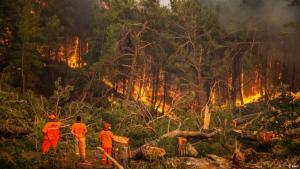 Waldbrände in der Türkei. (Foto: DHA)